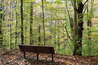 Shaw woods bench