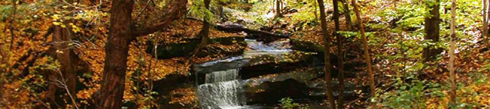 small stream going through forest in the fall