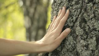 Touching tree bark