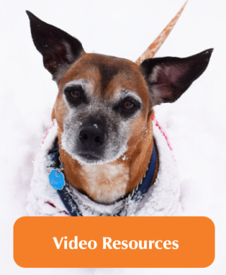 Video resources picture